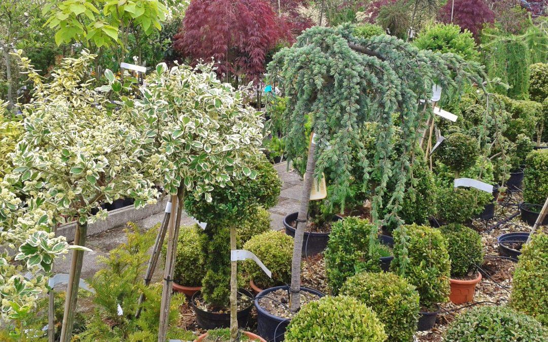 Kertészeti munkatárs / Kisegítő munkatárs