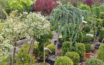 Kertészeti asszisztens
